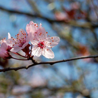 2011[Fleurs Montbonnot]